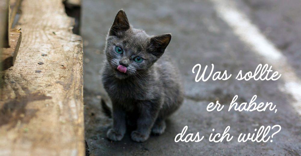 Schmutzige, obdachlose Katze